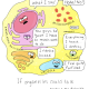 organellestalk-01