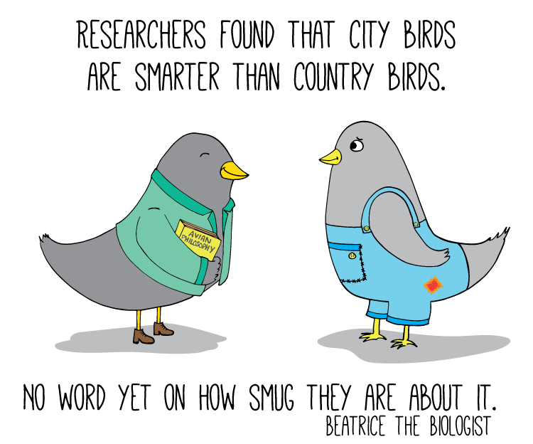 city birds are smarter than country birds smug about it