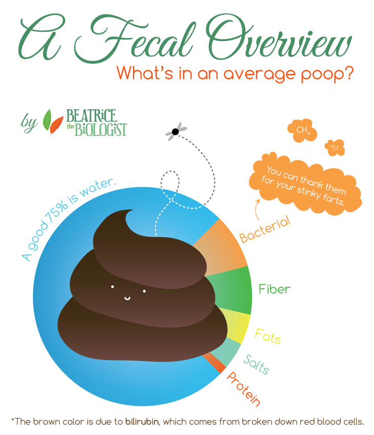 fecal overview what is in an average poop