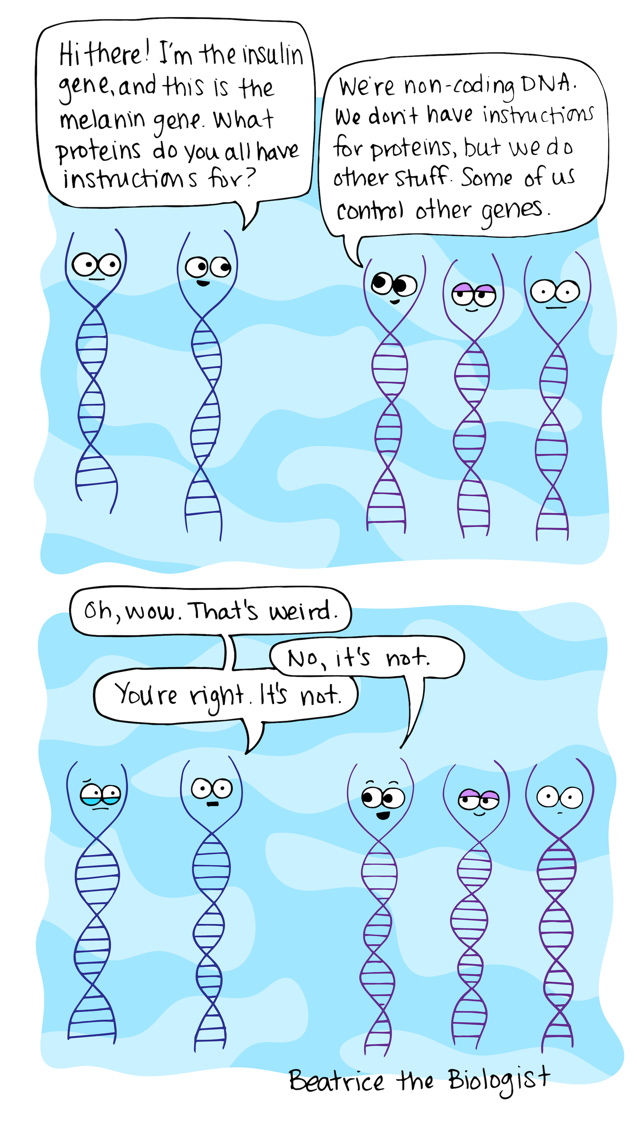 Hi there i'm the insulin gene and this is the melanin gene. What proteins do you all have instructions for? We're non-coding DNA. We don't have instructions for proteins, but we do other stuff. Some of us control other genes. Oh, wow. That's weird. No, it's not. You're right it's not. DNA comic